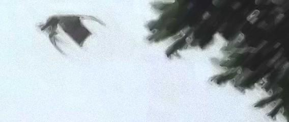 これが伝説のワイバーンか?南米チリで巨大な翼竜型の生物が教会の塔に降り立つ