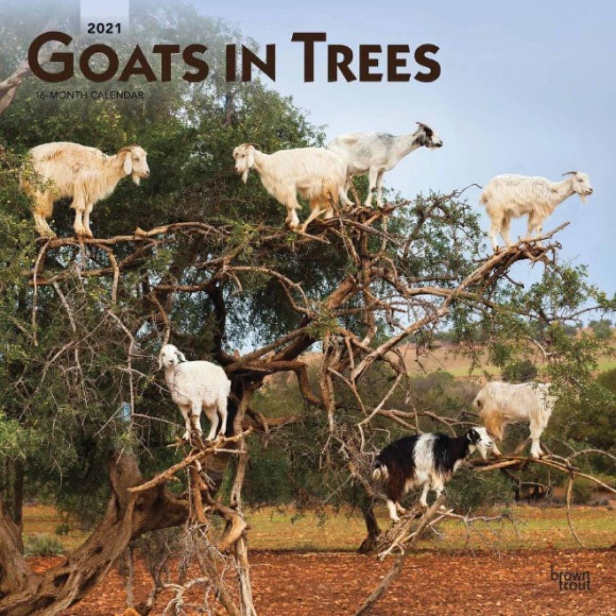 木登りヤギのカレンダー