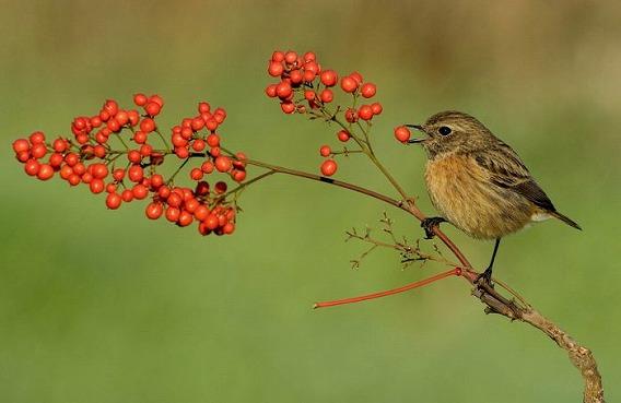 birds_40