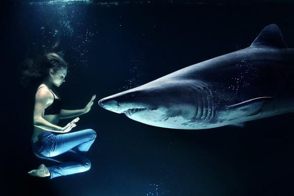 サメと人間は4億4000万年前に共通祖先が存在していた。3億8500万年前のサメの
