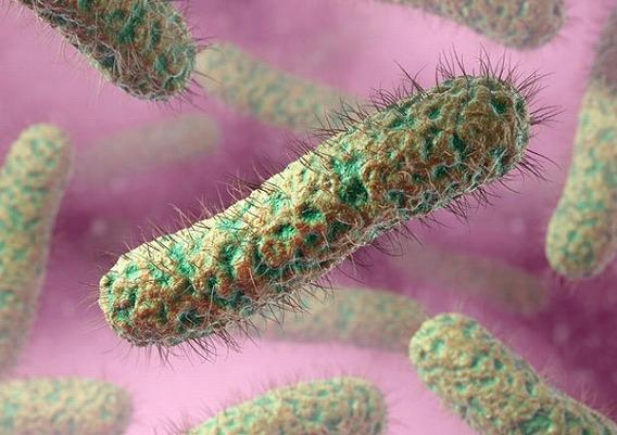 Microscop-Bacteria9