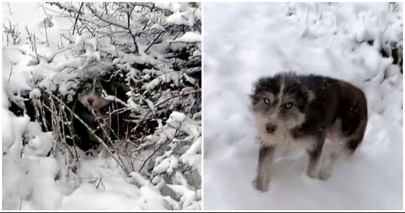 寒さで凍えている子犬たちを救うため、人間に助けを求めた母犬の物語(セルビア)