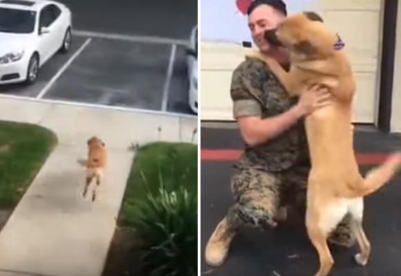 犬と飼い主の再会シリーズは何度見てもグっとくる。忘れるわけないんだから!9か月ぶりに再会した犬と兵士の物語