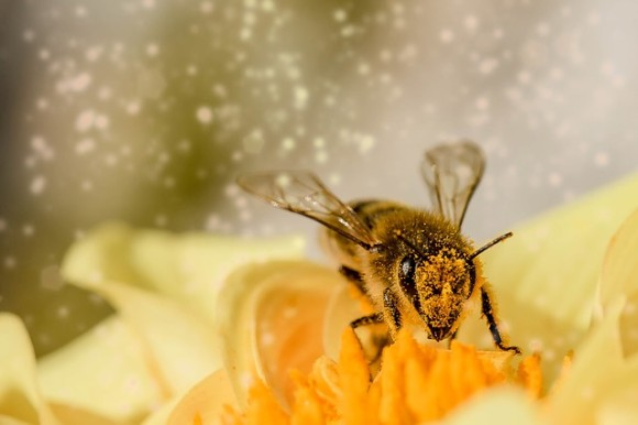 都会の自宅でも簡単にミツバチを飼育できる養蜂巣箱キットが開発される(イタリア)