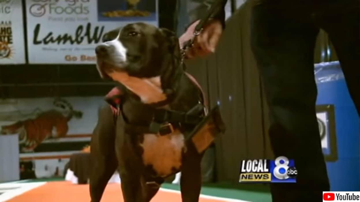 飼い主の代わりに卒業式に出席した犬