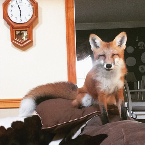 juniper-fox-happiest-instagram-12_e