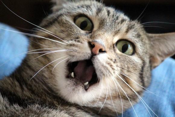 それってもしかしてストレスかも?猫の慢性的・長期的ストレスを判断する10の兆候