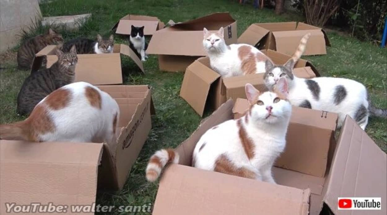 12cats8boxes6_640