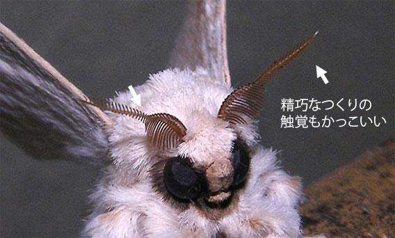 毛虫の種類と駆除方法 - ガーデニングの図鑑