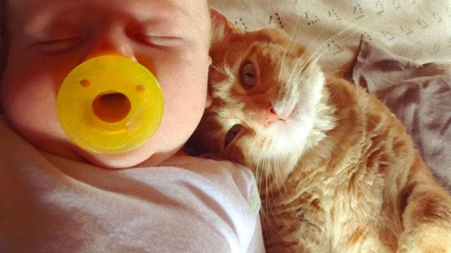 熱を出した赤ちゃんの看護師さんもこなした心優しい猫のミアさんにほっこりんちょ