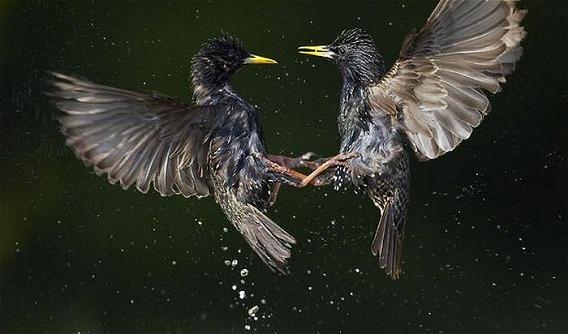 beautiful_photographs_of_birds_21