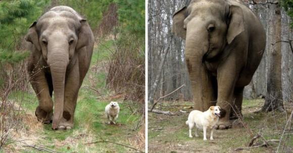 様々な愛のカタチ、それぞれの愛。希望を失わず愛を獲得した7種の動物たちの物語