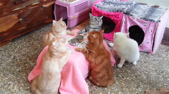 やらされている感は否めないが、それを拒まない猫たちがすごかった。猫たちのコタツを囲んでのポーカーゲーム