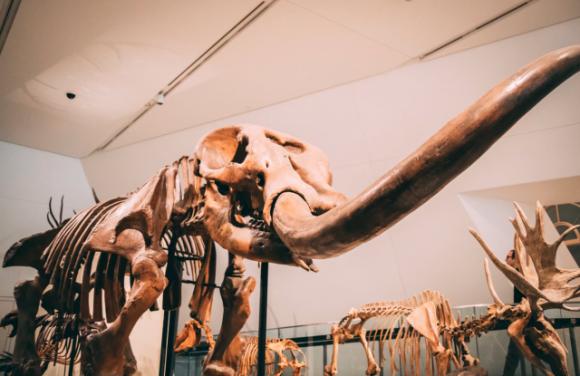 完新世に絶滅した大型動物の復活を目論むロシアの研究所