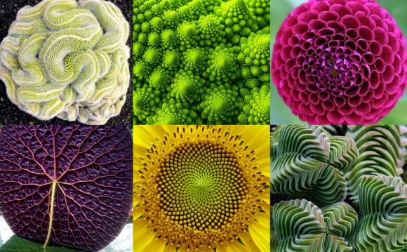 植物のフラクタル感にうっかり惑わされてみる