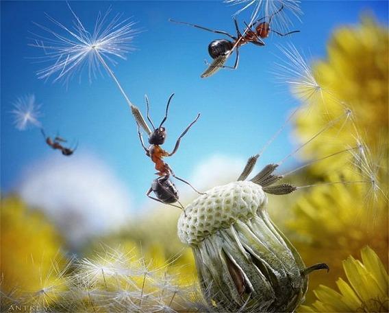 ants_21