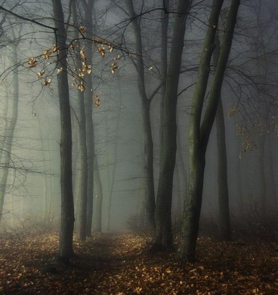 fog_14