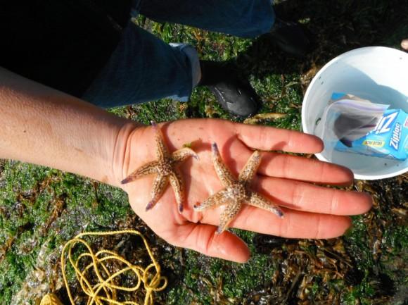 2011年の日本の津波が生態系を変えていた!?日本の海岸に生息していた生物が太平洋に大移動(米研究)