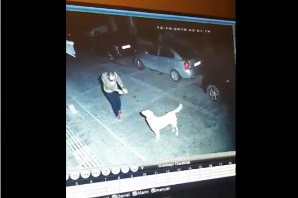 犬は犬好きの人がちゃんとわかる。路上で踊りながら近付く男性を見た野良犬、尻尾を振って応える(トルコ)