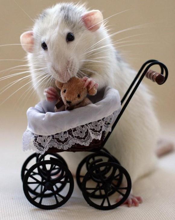 rats-with-teddy-bears-ellen-van-deelen-1_e