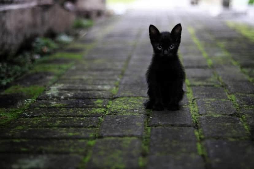cat-3169476_640_e