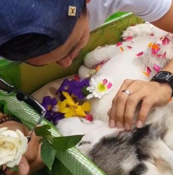 dog-5 [www.imagesplitter.net] (1)