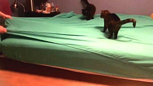bedmaking7