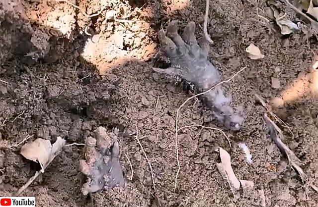 アルマジロの死んだふりスタイル