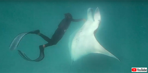 「ここが痛いんです」釣り針が刺さったマンタが、ダイバーに助けを求めてやってきた(オーストラリア)