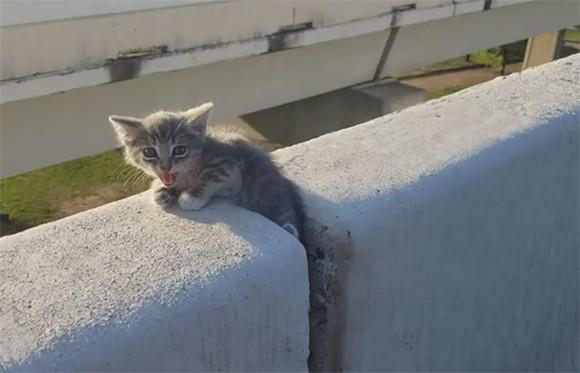高速道路を走行中に違和感のある物体が?もう一度戻ってみたら子猫だった!無事保護される(アメリカ)