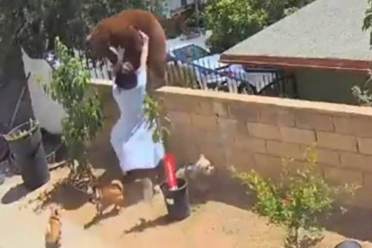 愛犬を守るため素手でクマを撃退した少女