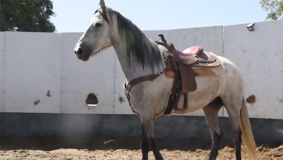 アメリカの宇宙軍所属の軍馬「ゴースト」