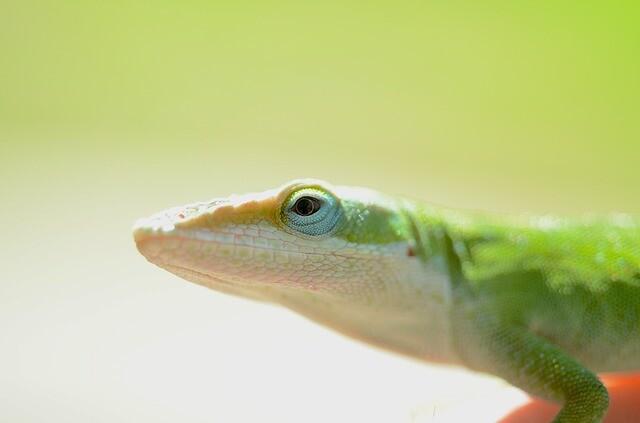 lizard-3981831_640