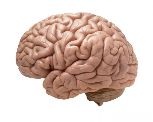 人をけなしたり批判するのが好きな「皮肉屋」は脳に損傷をうけ認知症になるリスク(フィンランド研究)