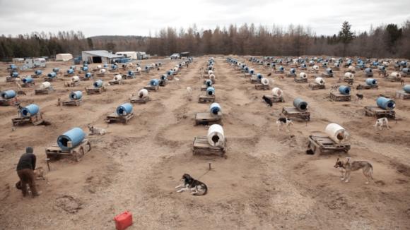 活躍は冬場のみ。そり犬の知られざる夏場の悲しい状況に終止符を打つ活動が開始される(カナダ)