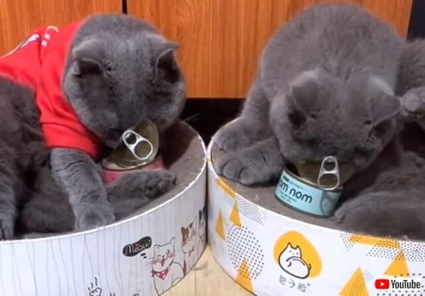 cartooncats5_640