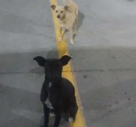 人間の家族が欲しかった2匹の野良犬