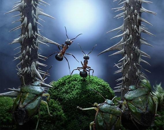 ants_03