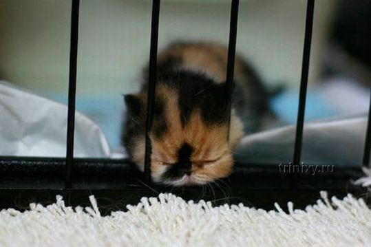 adorable_tiny_kitten_12