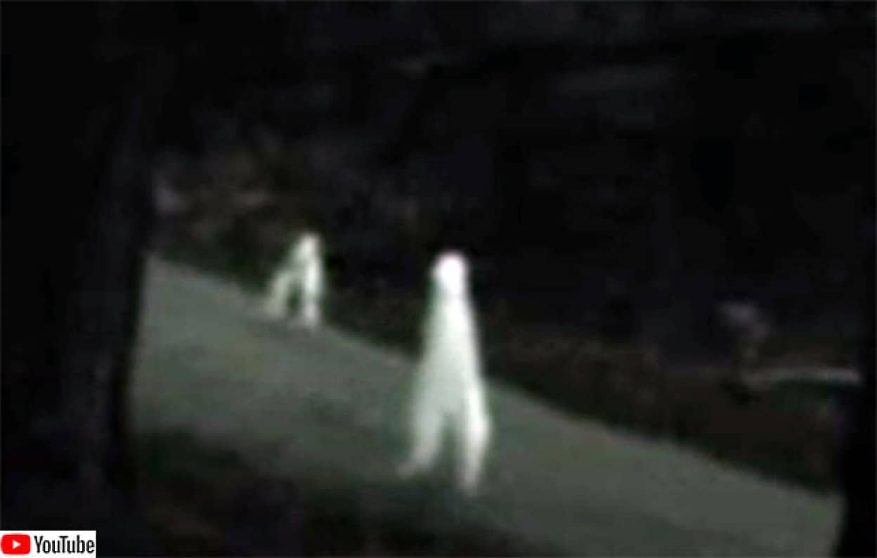 青白い物体が二本足で歩きまわる、アメリカに出没するUMA「ナイトクローラー」に関する都市伝説