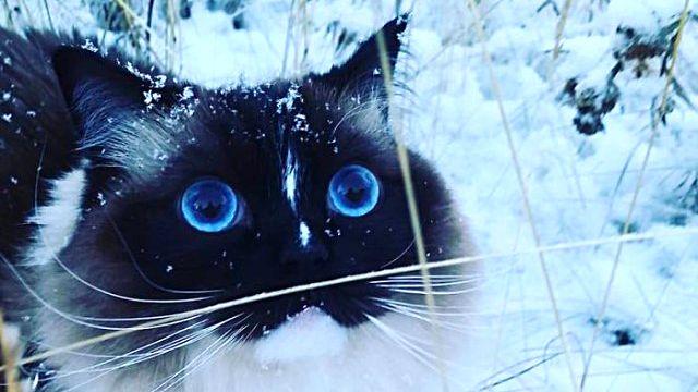 「寒い!冷たい!おもしろい?」初めて雪を見た動物たちの反応を詰め合わせでお楽しみください