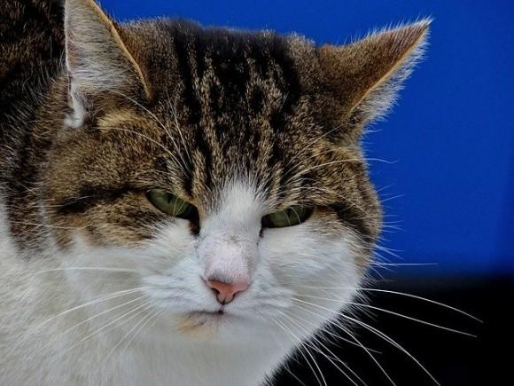cat-1950632_640_e