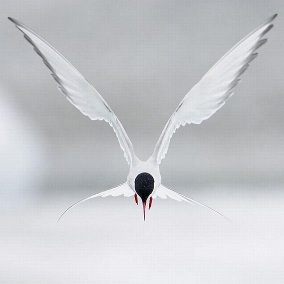 beautiful_photographs_of_birds_01