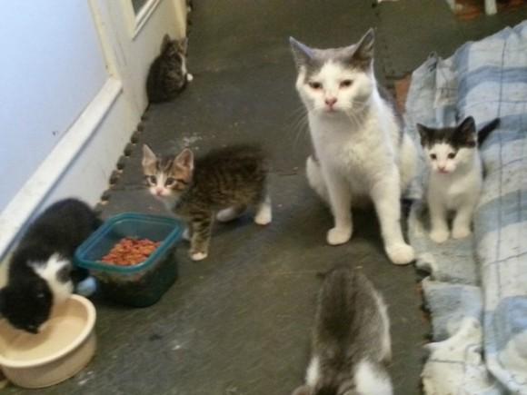 1匹の野良猫と遭遇した2人の兄弟。辛抱強く世話を続けて数か月後、5匹の分身を連れてやってきた!
