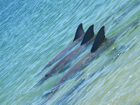 synchronized swimming animals 19