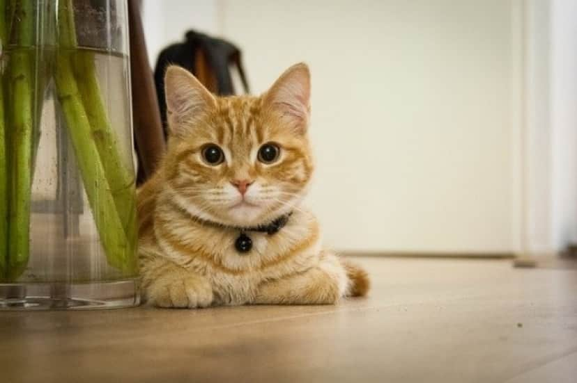young-cat-718785_640_e