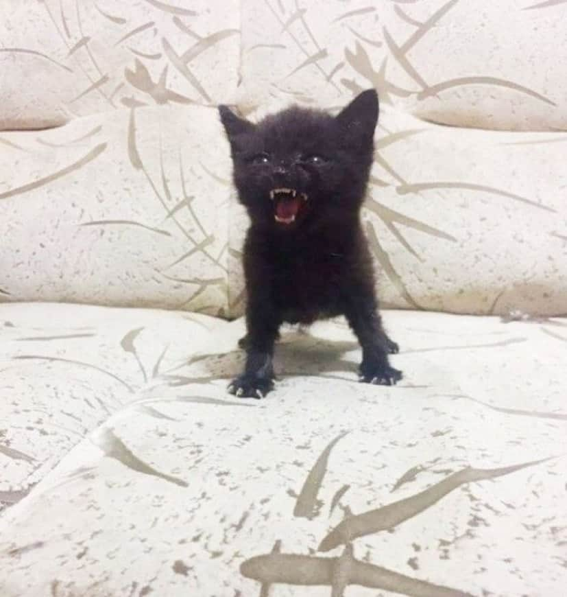 angry-kittens-105_e