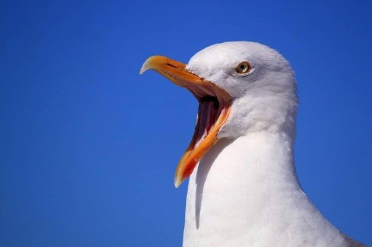 カモメを使って復讐をした女性、見事成功seagull-249638_640_e