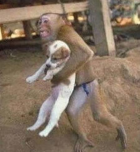 a97299_g187_9-monkey-cat