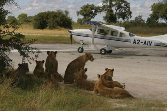 only_in_africa_07